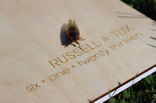 cicadas at wedding | Tuxedo & Russell's Hudson Valley June Wedding | Brooklyn Homemaker