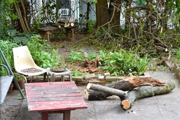 fallen tree after